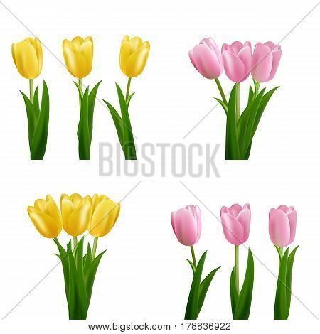 Tulips. Pink and yellow vector tulips bouquet isolated. Flowers in different shapes