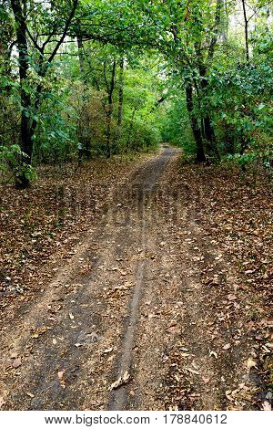 the ground pedestrian road in the forest