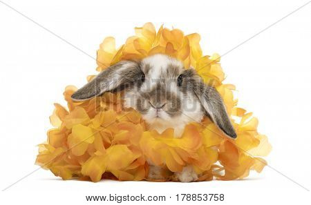Rabbit in artificial flowers, isolated on white