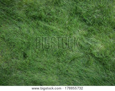 close up Pattern Of long green japan grass