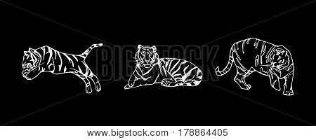 Tiger emblem set. Hand-drawn pencil graphics, tiger head. Engraving, stencil style. Black and white logo, sign, emblem, symbol. Stamp, seal. Simple illustration. Sketch.