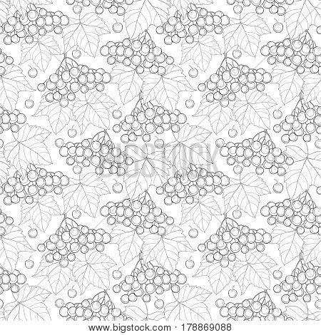 Vector seamless pattern with outline bunch of Viburnum or Guelder rose, leaves and berry on the white background. Floral background with viburnum in contour style for autumn design and coloring book.