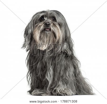 Mixed-breed dog sitting, 5 years old, isolated on white