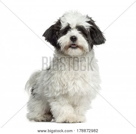 Mixed-breed dog standing, 7 months old, isolated on white