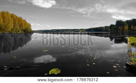 Black and white photo with the colored forest, a pier and water lilies. Big beautiful calm lake in the fall . It reflects the forest and clouds.