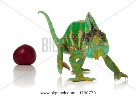 Chameleon And Plum