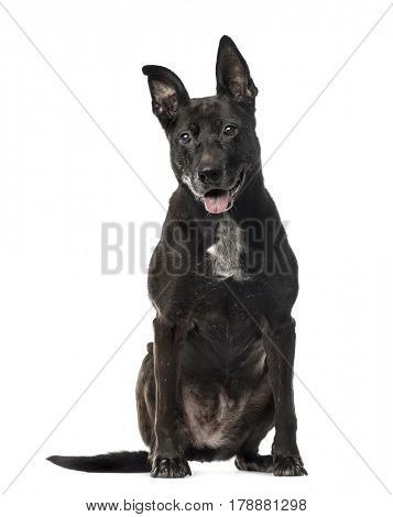 Black Mixed breed dog sitting, isolated on white