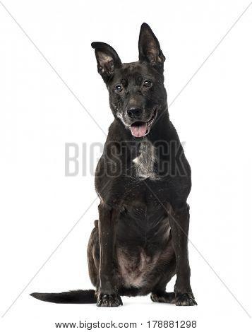 Black Mixed breed dog sitting, isolated on white