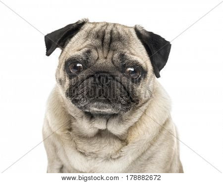 Close-up of a Pug, 6 years old , isolated on white