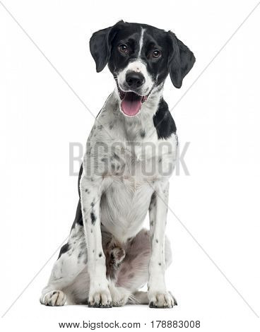 Mixed-breed dog sitting, 2 years old , isolated on white