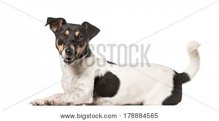 Side view of a Jack Russell Terrier lying , isolated on white