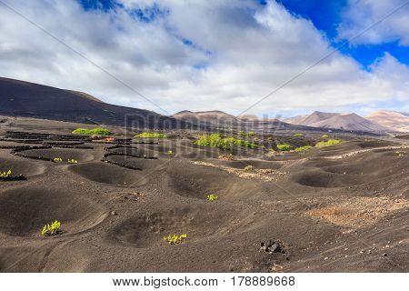 Wine Region Of Lanzarote Early In The Season