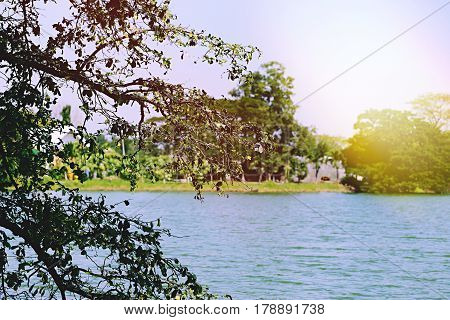 Lake waterscape nature green tree closeup. Riverside green nature background