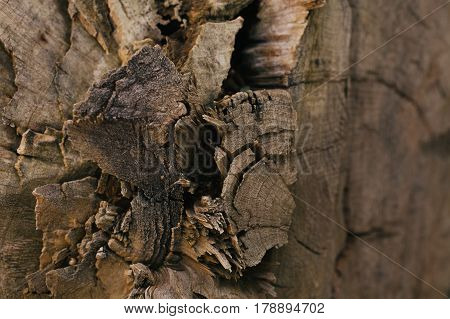 Tree trunk texture and background. Texture of tree cut down. Wood background. Abstract background and texture for design. Abstract wood pattern.