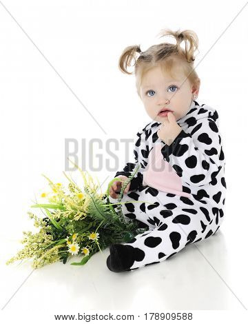 An adorable baby girl looking confused in her cow costume, a small bunch of yellow flowers in her lap.  On a white background.
