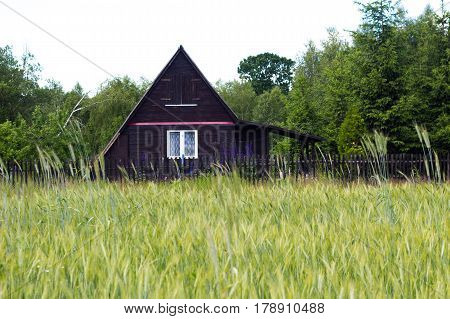 Old Small Wooden Summer Cottage In Poland In Front Of Green Field Meadow. Holidays Vacation
