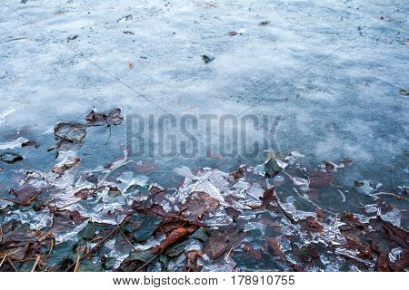 Frozen Leaves Under Ice. Frozen Water In River Or Lake