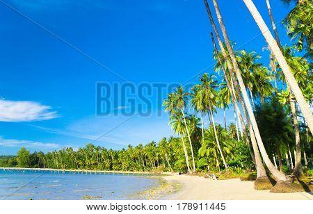 Idyllic Island Palm Panorama