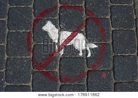 No Dogs Red Sign On A Pavement And White Picture Icon Of A Dog