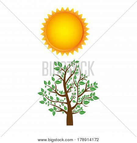 colorful nature picture with tree with leafy branches and sun vector illustration