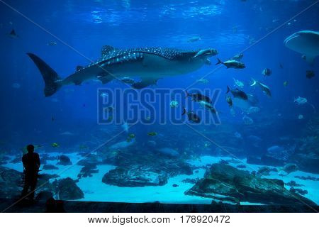 group of People observing fish at an aquarium