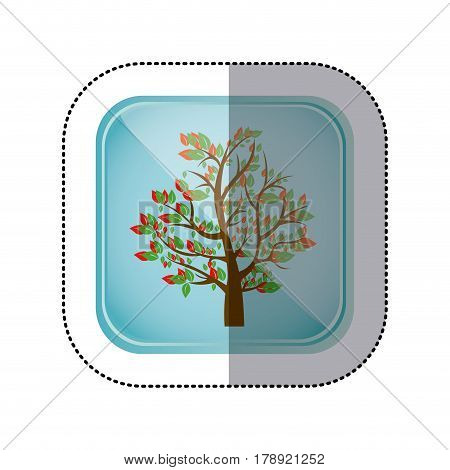 sticker colorful square frame and blue background with spring tree with leafy branches vector illustration