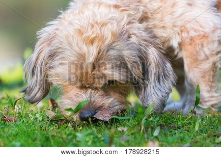 Cute Dog Sniffles In The Grass
