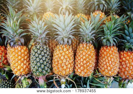 A lot of pineapple fruit background. Thailand.