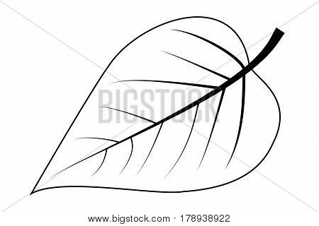 lilac - leaf vector illustration , lilac  leaf ,