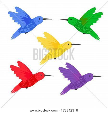 Set five small colorful bird hummingbird small colorful bird hummingbird vector illustration