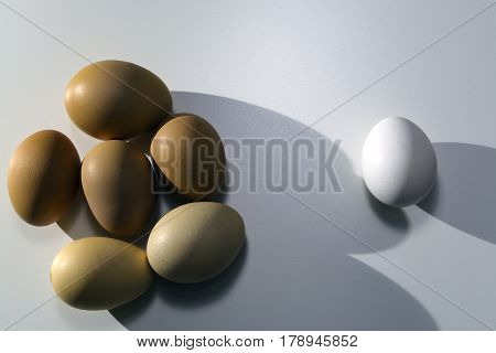 Homemade Chicken Eggs Of Brown Color Are Close Together And Lays One White Egg From The Store In The