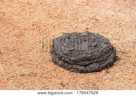 Close up of fresh buffalo manure on a ground