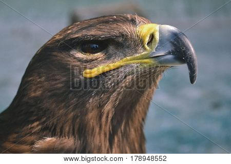 Hawk is similar to the Eagle The birds of prey as well. But the Hawks are smaller Is there a hooked beak. high And have very good eyesight closeup