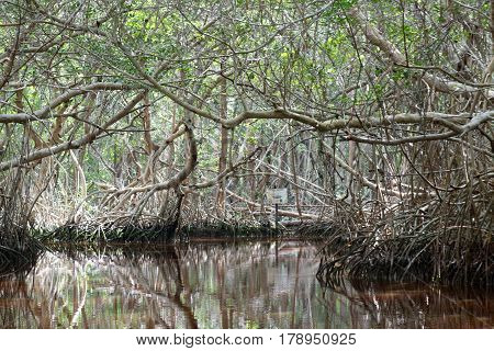 Mangrove forest in the Ria Celestun lake, Mexico
