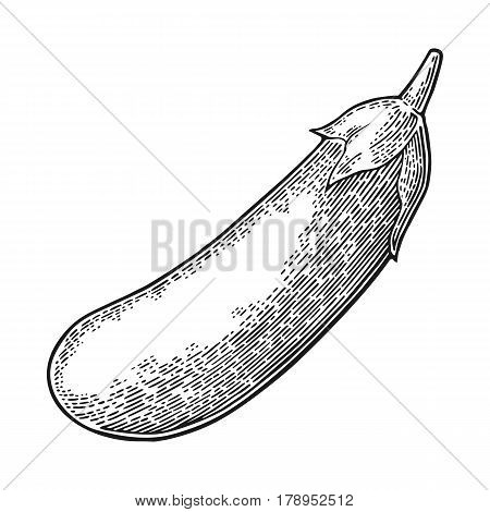 Eggplant. Vector black vintage engraved illustration for menu, poster, label. Isolated on white background