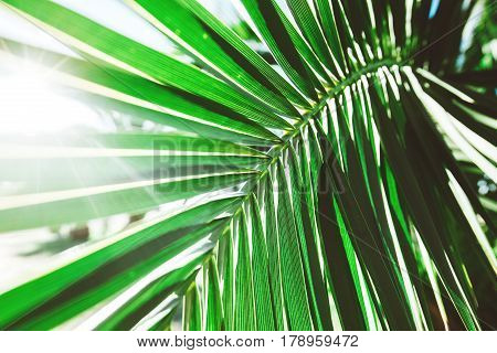 Sunlight over green palm leaf. Tropical greenery trendy background