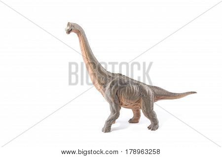 Brown Brachiosaurus Altithorax From The Late Jurassic Full Body White Background