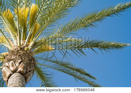 Tropical palm tree in front of blue sky