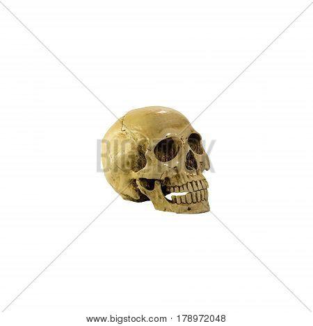 skulls , skulls on the white background
