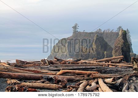 Driftwood Logs Covering a Beach with Seastacks in the backgrounds