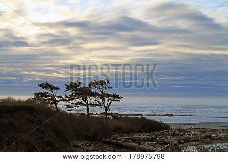 Windswept Trees Silhouetted Against a Cloudy Sunset at the Beach