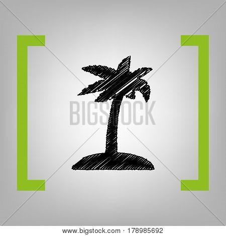 Coconut palm tree sign. Vector. Black scribble icon in citron brackets on grayish background.