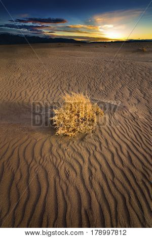 Single Tumble Weed on Sand dune at sunset in the Nevada Desert.
