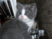 small kitten on a table poster