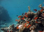 A picture of a coral reef teeming with life. shot in the Red Sea poster