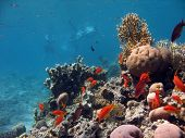 A picture of a coral reef teeming with life + swimmers in the background. shot in the Red Sea poster