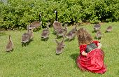 young girl looking at the geese and their babies**Note slight blurriness, best at small sizes. poster