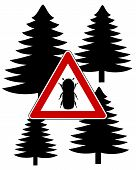 Detailed and colorful illustration of bark-beetle attention sign poster
