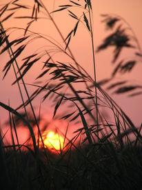 Sunset Through The Marsh Grass