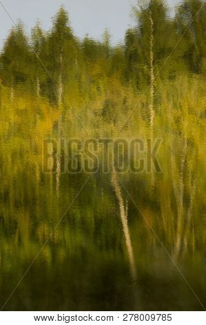 Reflection Of Green And Yellow Birch Trees On Rippled Water.